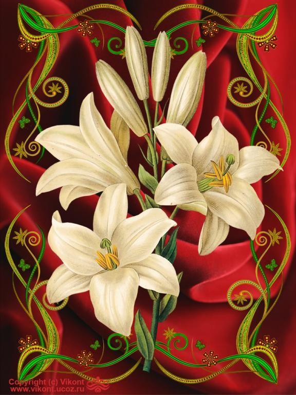 Красивая открытка лилии